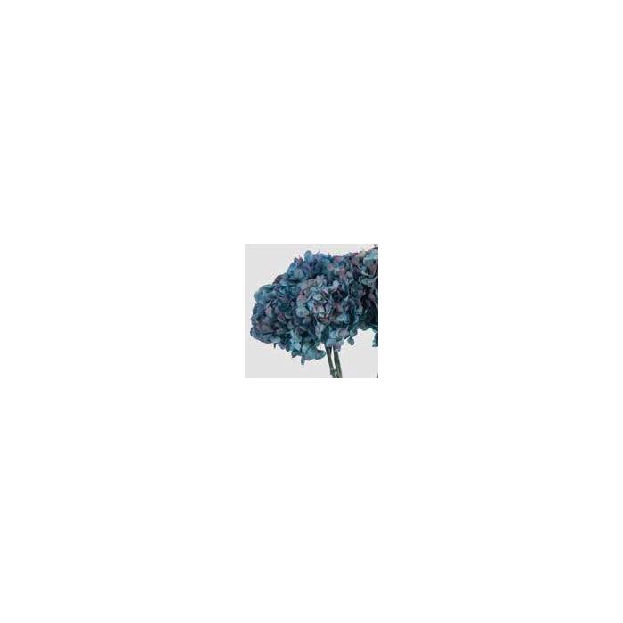 <h4>Hydrangea / Hortensia Nat.Blue / Burgundy HRT/2680</h4>