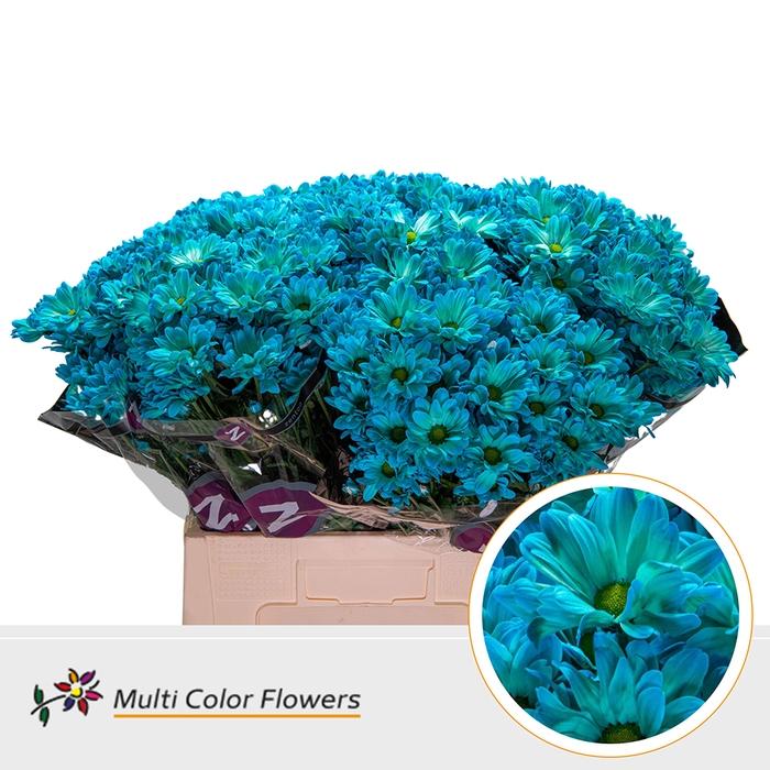 <h4>Chr. Bacardi  wit Turquoise</h4>