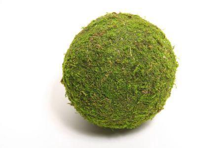 <h4>Ball Asia Moss D15.0</h4>