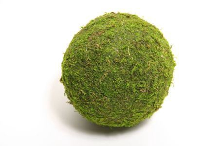 <h4>Ball Asia Moss D8.0</h4>