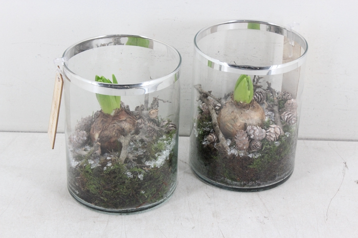 <h4>arr.. Hyacint MB - Glas pot zilv rand</h4>