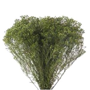 Broom Green BRM/4123