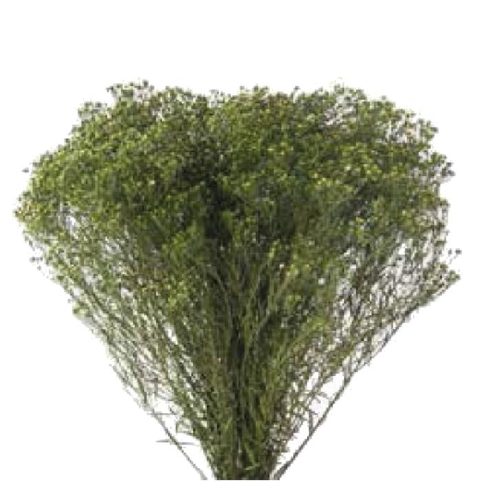 <h4>Broom Green BRM/4123</h4>