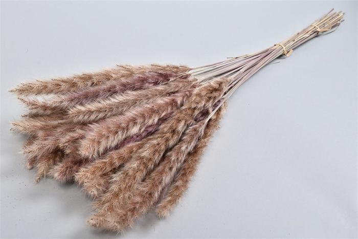 <h4>Dry Pampas Fluffy 75cm Per 25-30 Stuks</h4>