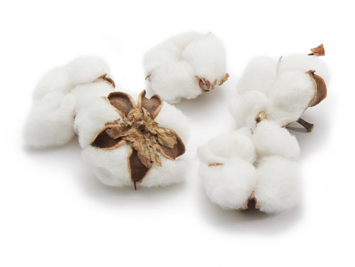 <h4>Dried articles Cotton pods x12</h4>