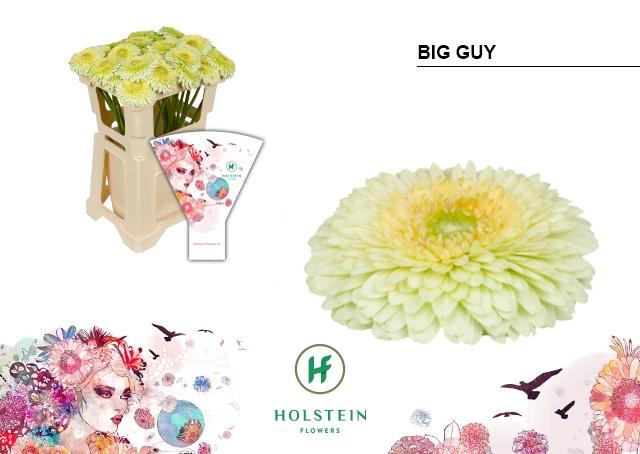 <h4>GE GBV hoes Big Guy</h4>