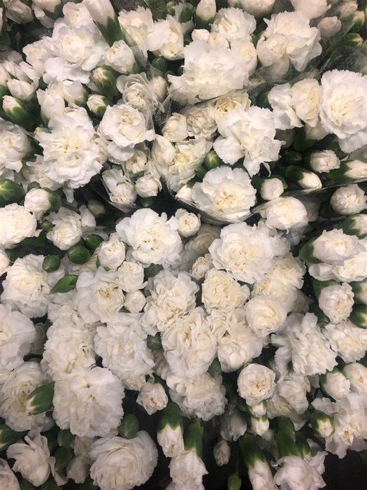 <h4>Di tr White Fleurette</h4>