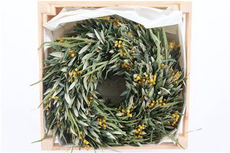 <h4>Wr Olijf Mimosa Naturel 40cm</h4>