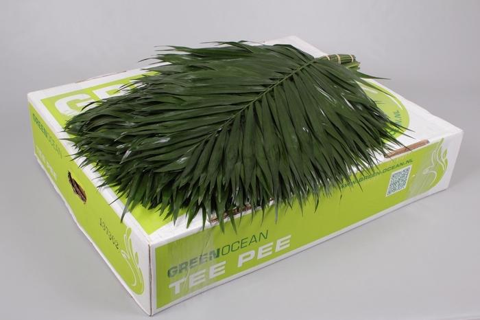 <h4>TeePee Green Ocean</h4>