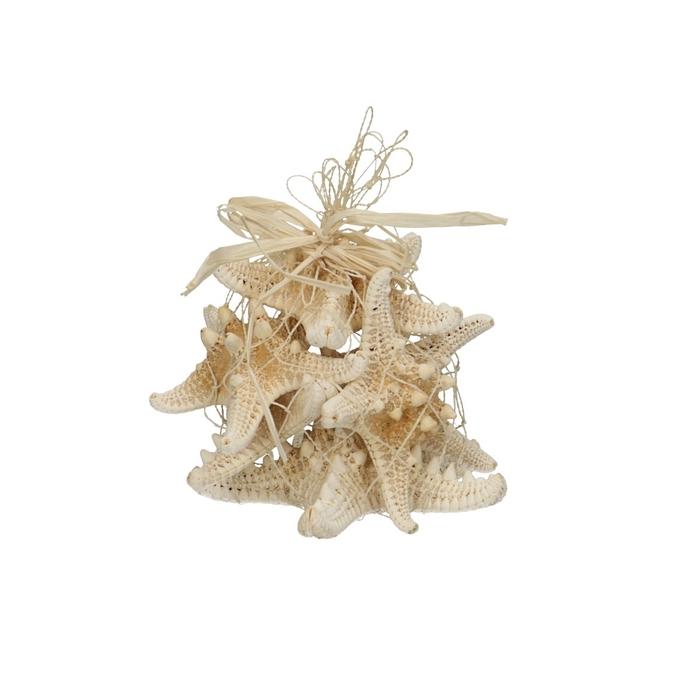 <h4>Shell Starfish Knobby d08cm x5</h4>