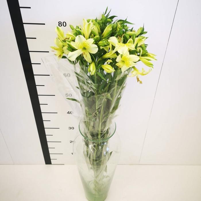 <h4>Alstroemeria amarilla</h4>