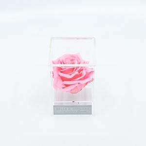 Plexi 7cm roze roos