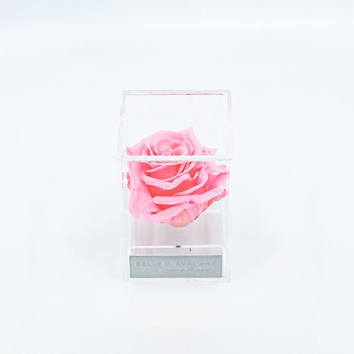 <h4>Plexi 7cm roze roos</h4>