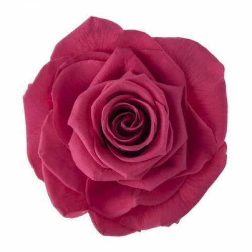Rose Ava Pink Framboise