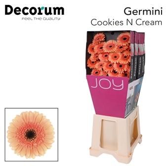 <h4>Ge Mi diamond Cookies N Cream</h4>