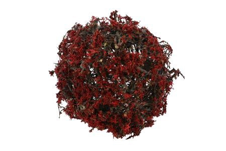 <h4>Ball Bonsai Mossed D25.0</h4>