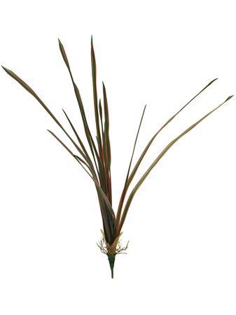 <h4>Dracena marginata nancy 53cm r</h4>