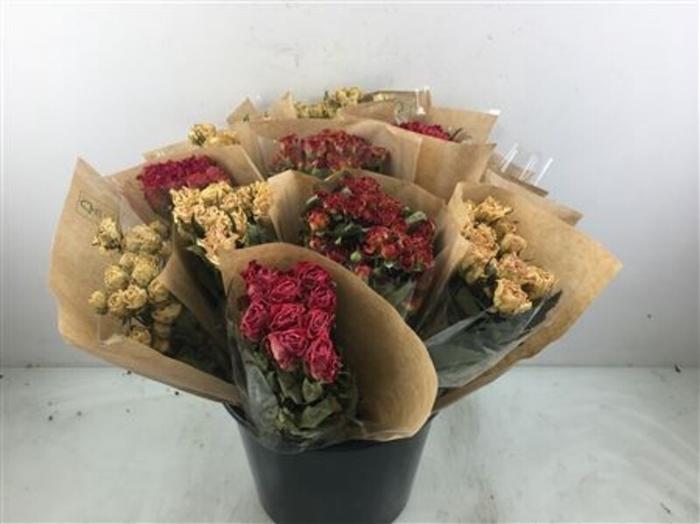 <h4>Dried Rosa</h4>