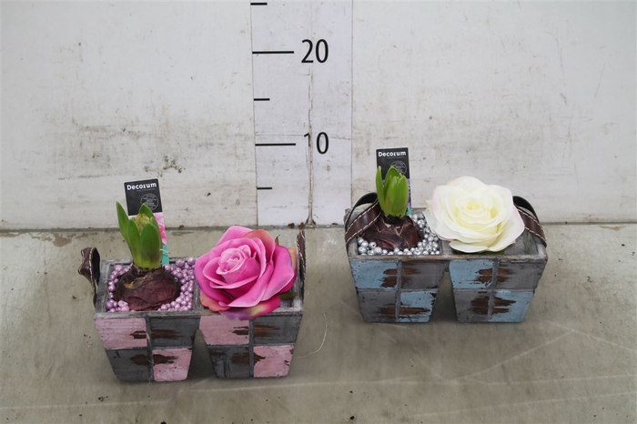 <h4>Hyacint Mix Hl15650 Hout Duo Met Hengsel [lovely C</h4>
