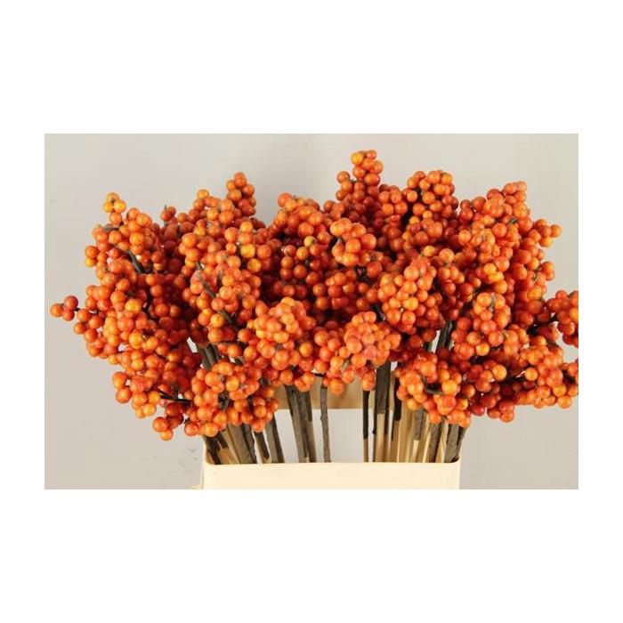 <h4>Stick Berries Ilex Orange</h4>