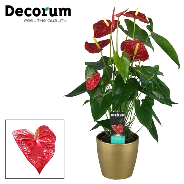 <h4>Anthurium Dakota pot 17 keramiek goud</h4>