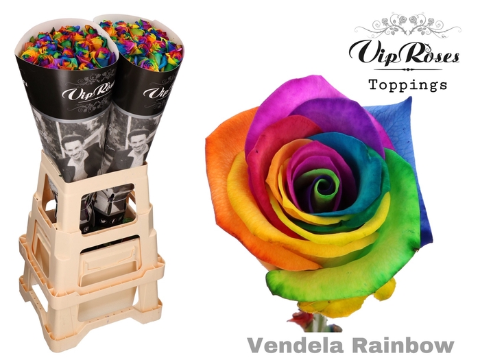 R GR VENDELA RAINBOW