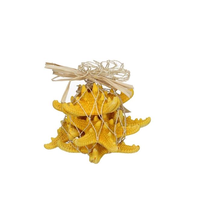 <h4>Sale Starfish Knobby d08cm x5</h4>