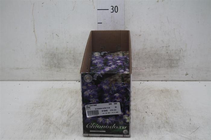 <h4>Bol Chionodoxa Lucilliae 10 Zakjes X20</h4>