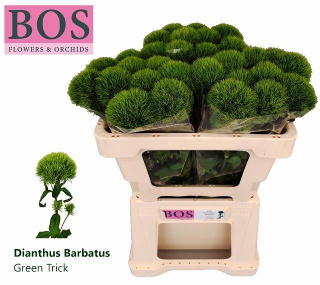 <h4>DI BARB GREEN TRICK</h4>