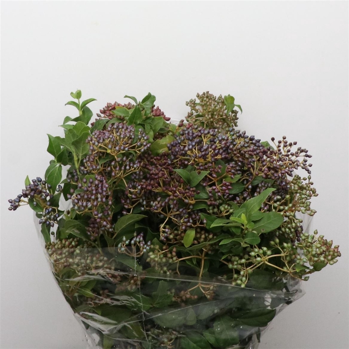 <h4>Viburnum Berries 300grams</h4>