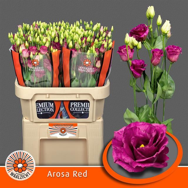 <h4>Eustoma Arosa Red</h4>