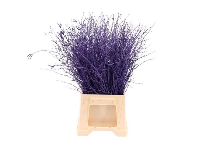 <h4>Berk ( Birch ) Purple</h4>