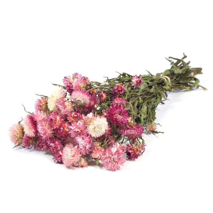 <h4>DRIED FLOWERS - HELICHRYSUM NATURAL PINK</h4>