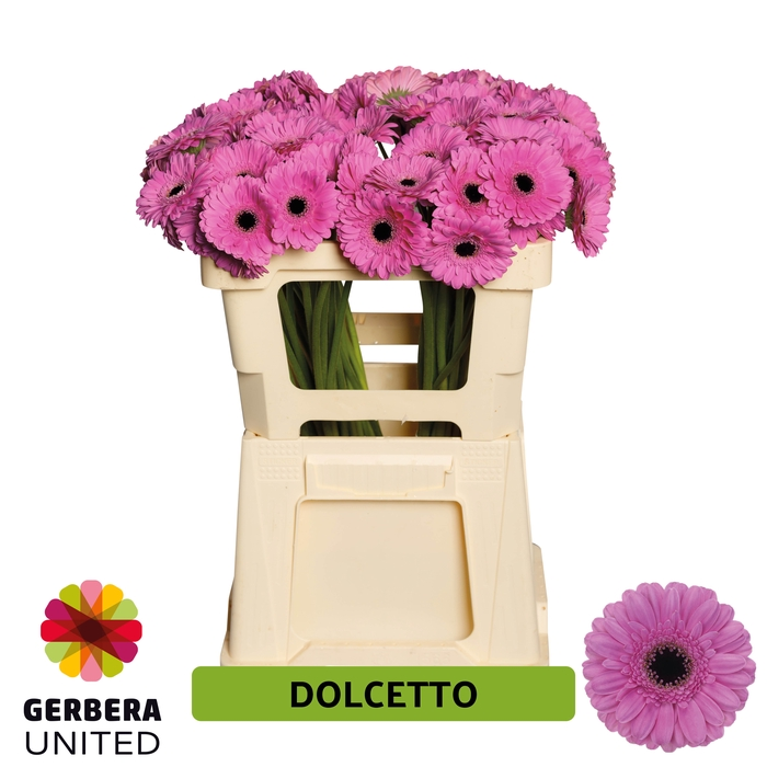 <h4>GE MI Dolcetto water</h4>