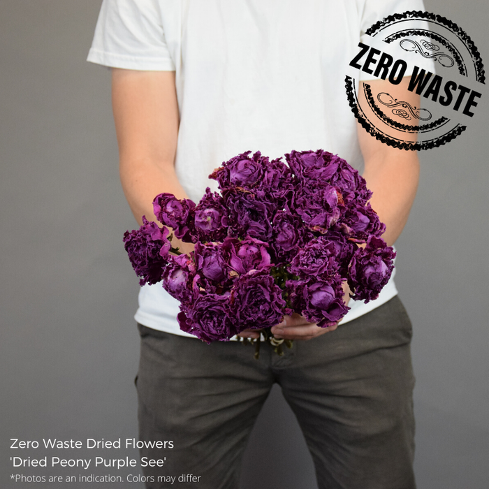 <h4>DRIED PEONY PURPLE SEA</h4>