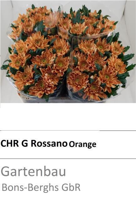 <h4>CHR G ROSSANO ORANGE</h4>