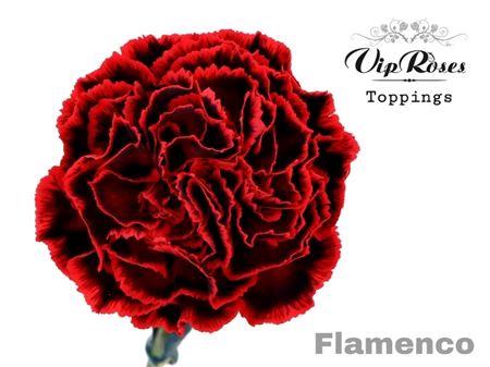 <h4>Di St Flamenco</h4>