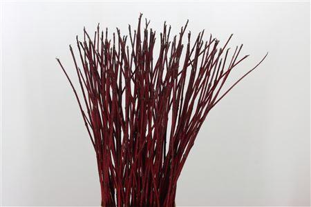 <h4>Cornus Sibirica Red</h4>