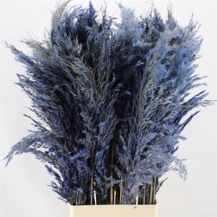 <h4>Pampas Light Blue</h4>
