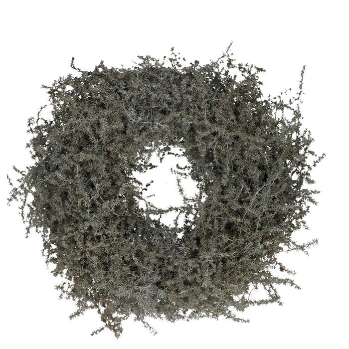 <h4>Wreath d35cm Asparagus wax</h4>