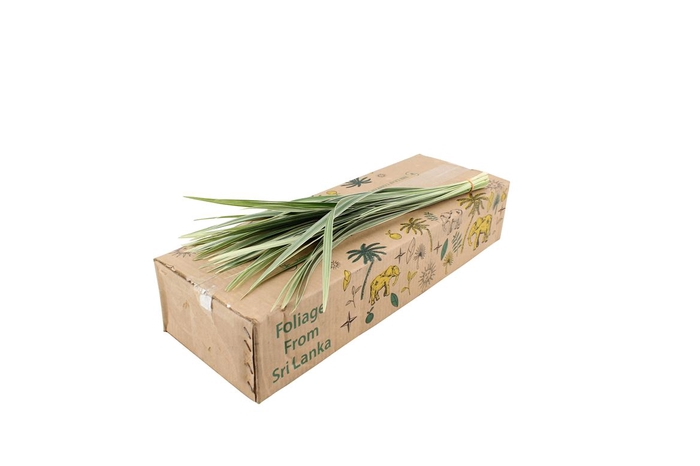 <h4>T-grass Variegated 70</h4>