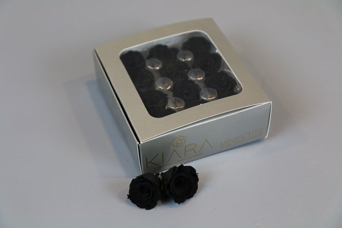 <h4>Rosa Preserved Black Beauty Mini Petite</h4>