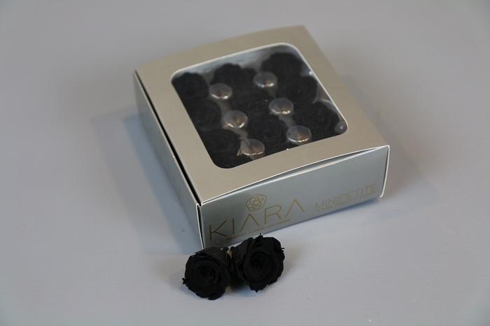 <h4>Rosa Preserved Black Beauty Mini Petite</h4>