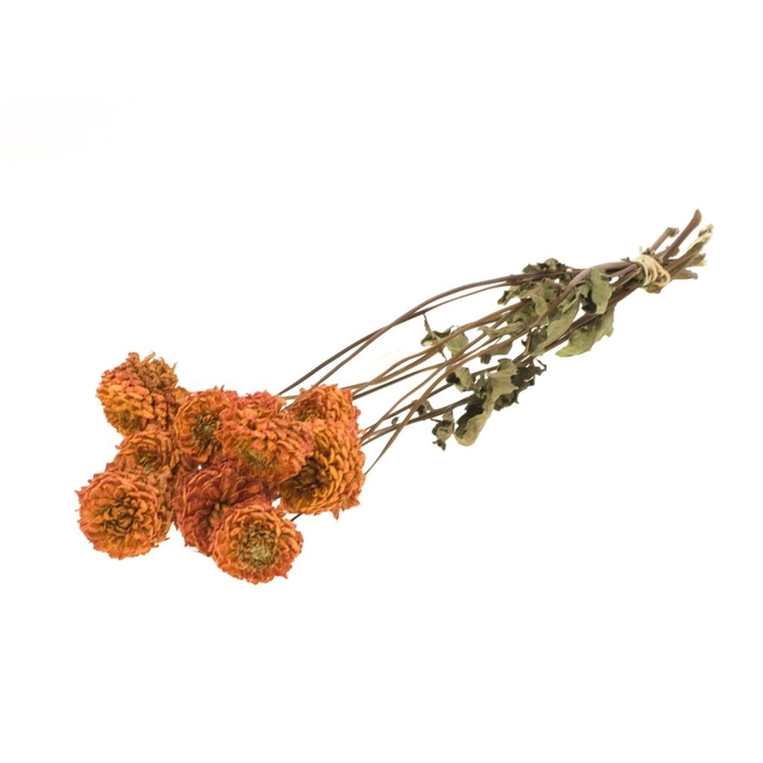 <h4>Dahlia nat. orange</h4>
