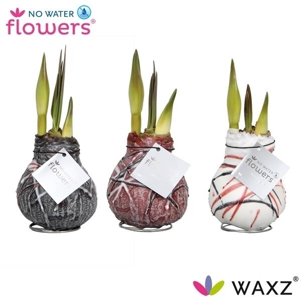 <h4>No Water Flowers Waxz® Art v Gogh</h4>