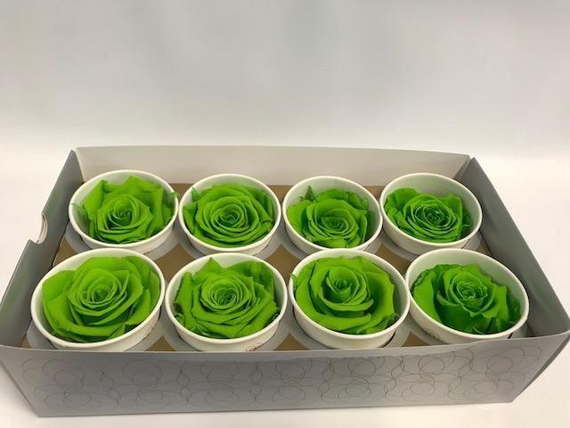 Rose Super Green Glow
