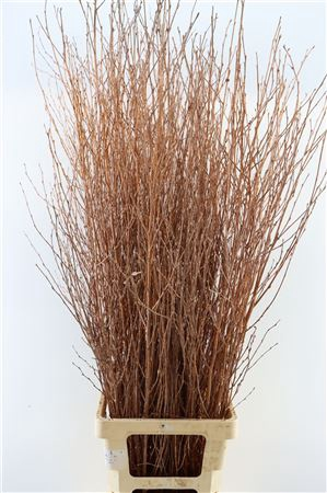 <h4>BERK 130CM GL COPPER BUNCH</h4>