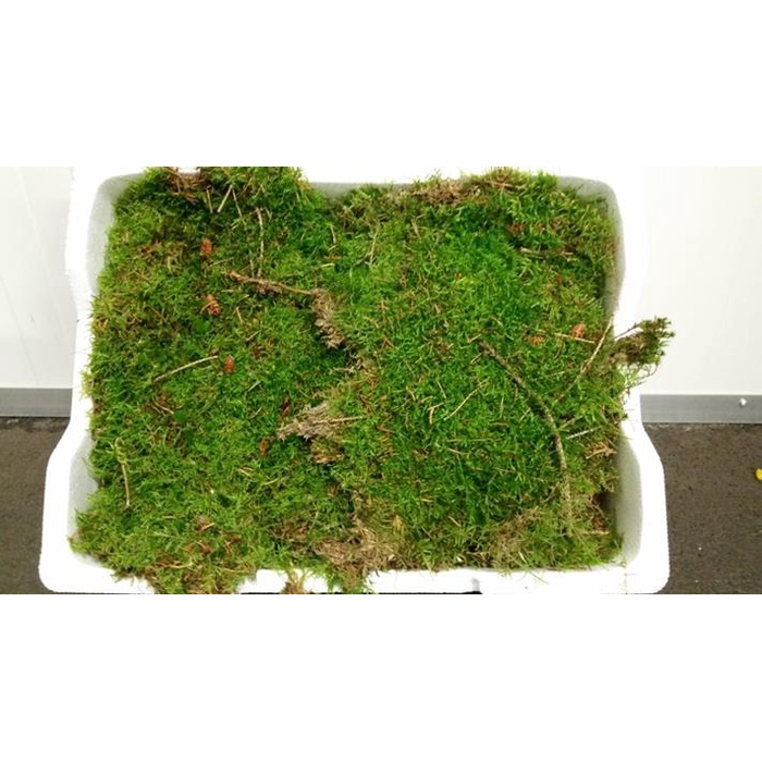 <h4>Moss 'platmos' Styropor</h4>