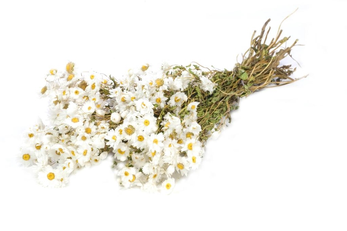 rodanthe white natural