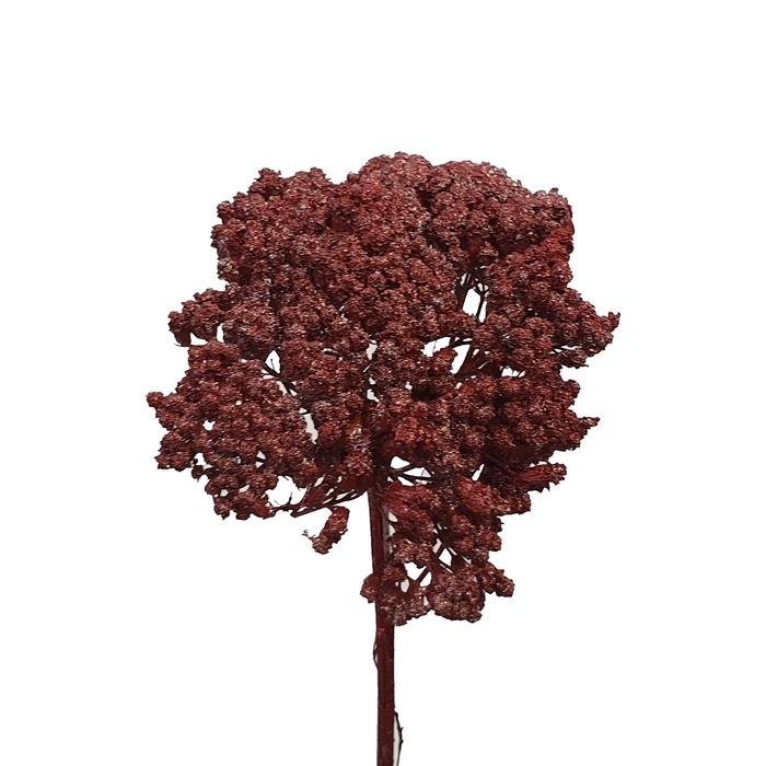 <h4>Achillea Metalic antique red</h4>